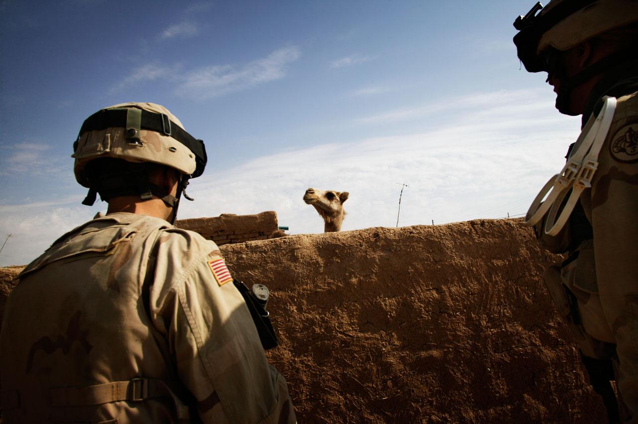 Soldaten des 3. Panzerkavallerieregiments fahnden zusammen mit irakischen Soldaten in und um Bi'aj, einer Stadt in der Nähe der syrischen Grenze, nach gesuchten Personen und Waffen. Foto: Christoph Bangert