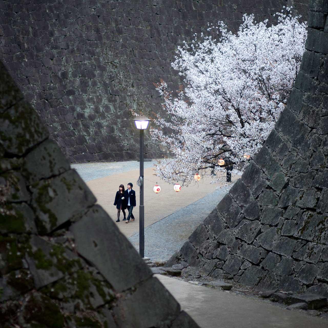 Kirschblüten am Schloss von Kumamoto. Foto: Stefan Boness