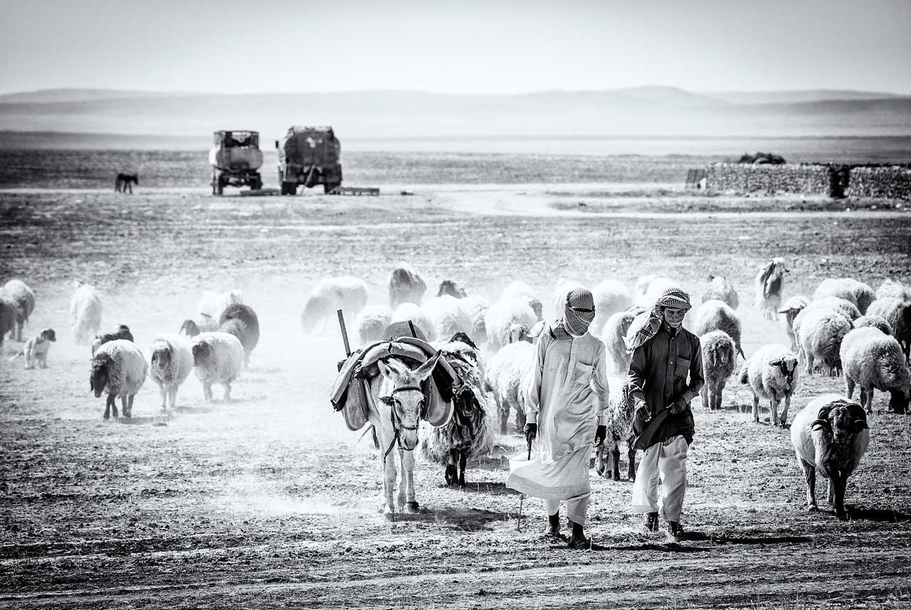 Schäfer mit ihrer Herde zwischen Palmyra und Deir ez-Zor. Foto: Lutz Jäkel/Laif