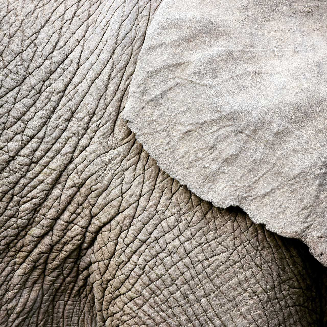 Shades of WILD – Südafrika 2017. Foto: Michael Zegers