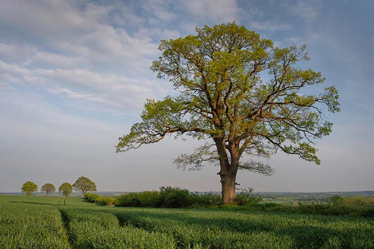Baumland – Was Bäume erzählen